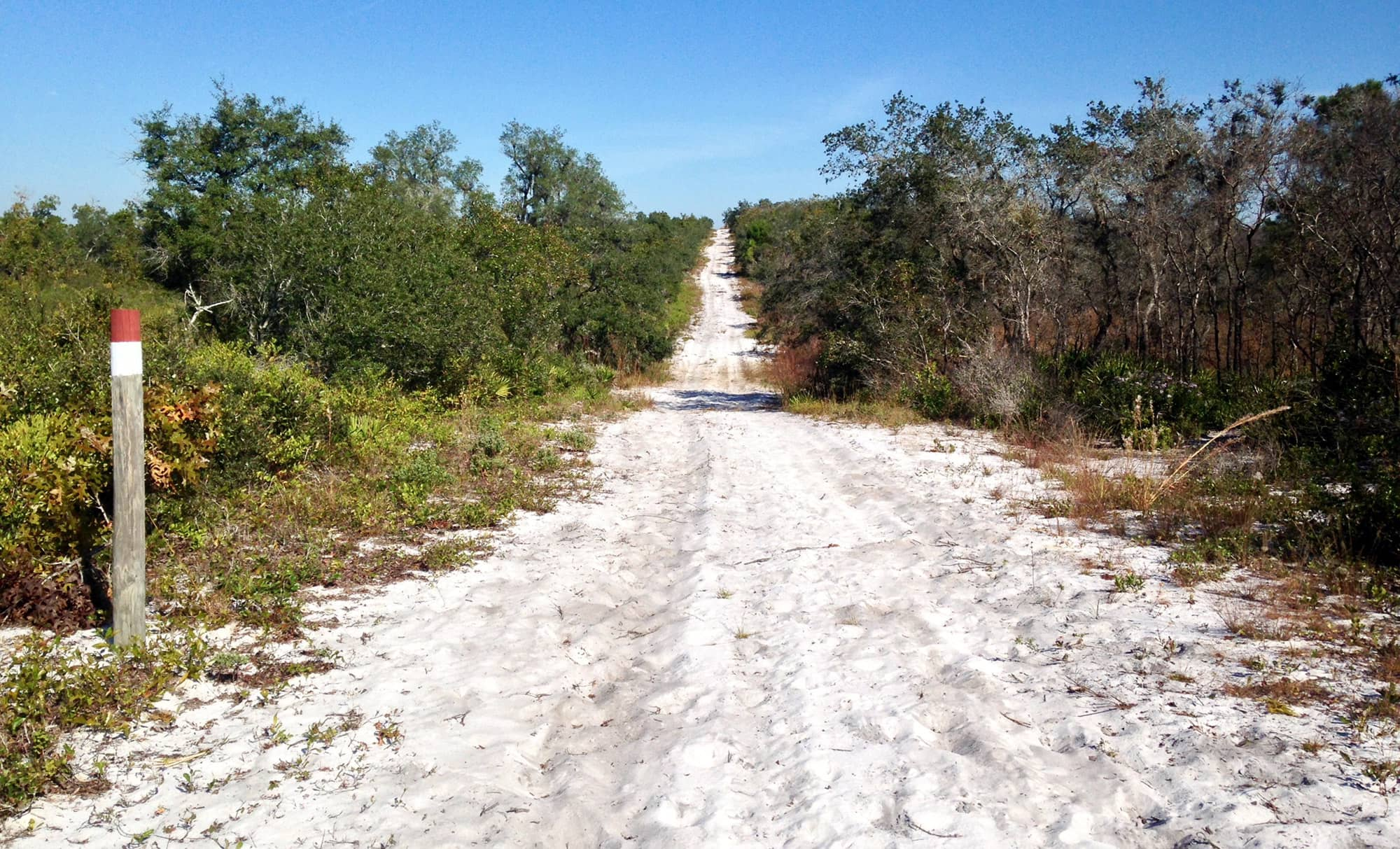 Sandy hiking path showing elevation change at Allen David Broussard Catfish Creek Preserve State Park in Haines City, FL