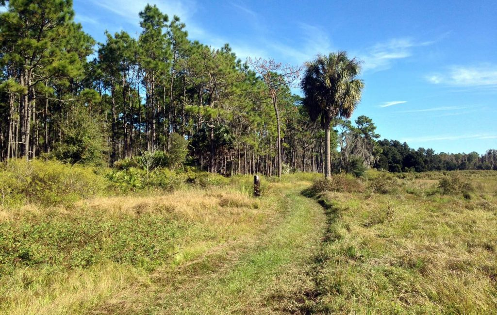 hiking trail in the middle tree grouping on left and open pasture on right at Colt Creek State Park in Lakeland, FL