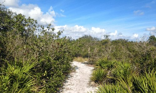 sandy scrub hiking trail at Crooked Lake Prairie in Babson Park, FL