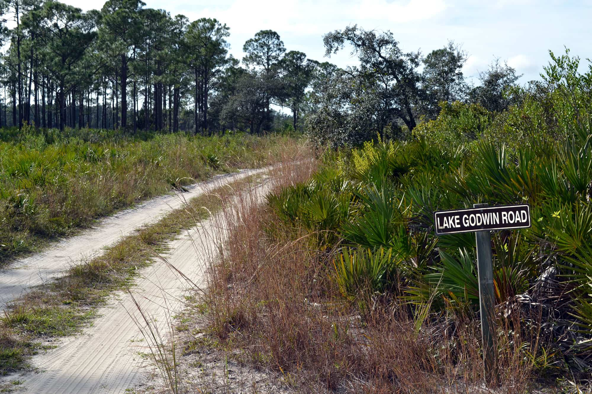 Sandy access road at Arbuckle Wildlife Management Area in Frostproof, FL