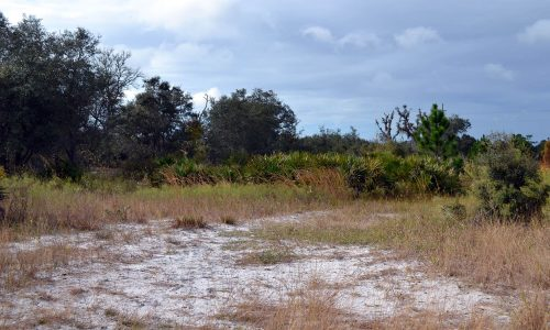 Sandy hiking trail at Walk-In-The-Water Wildlife Management Area