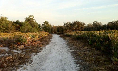 Sandy trail through scrub habitat at Lakeland Highlands Scrub