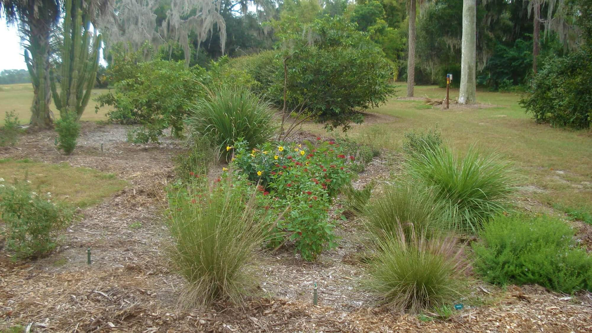 Florida native plants next to a walking trail at Mackay Gardens and Lakeside Preserve in Lake Alfred, FL