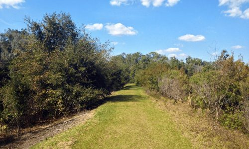 Grassy Panther Point Trail at Marshall Hampton Reserve in Winter Haven, FL
