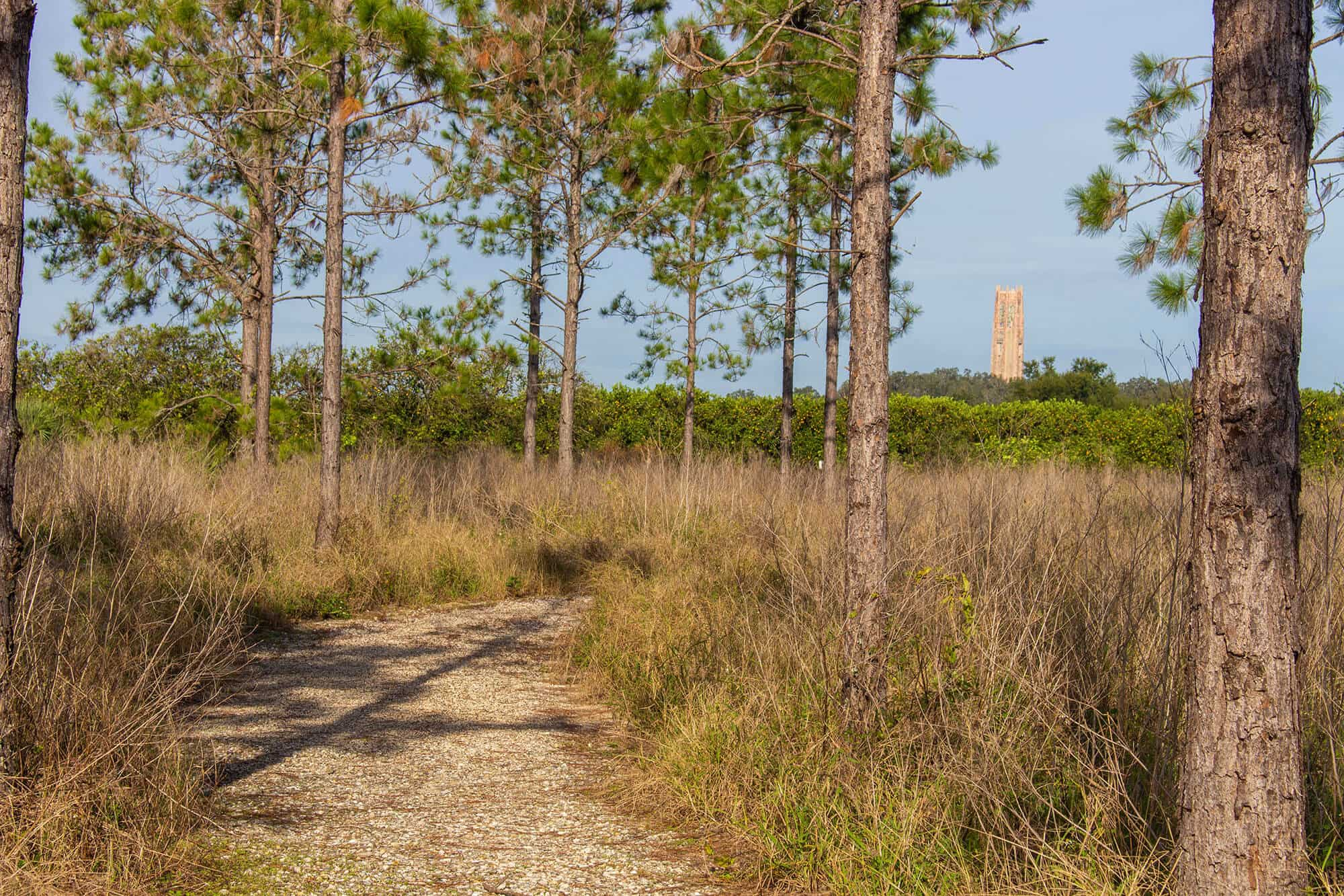 Nature trail through scrub and trees at Pine Ridge Nature Preserve. Carillon Tower in the distance at Bok Tower Gardens in Lake Wales, FL