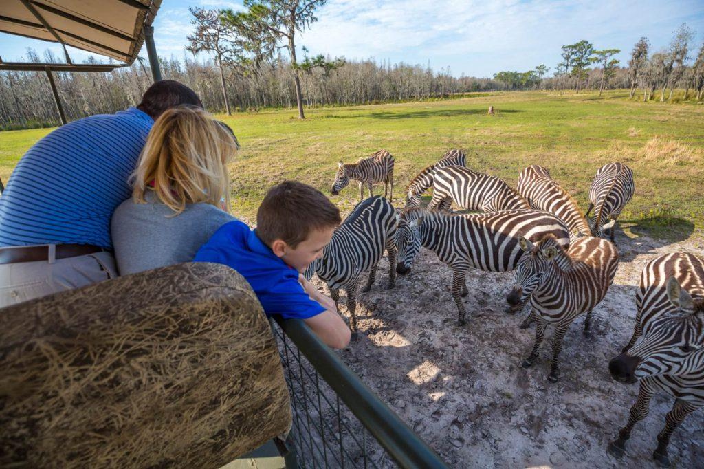 Family of 3 in a safari vehicle looking at zebras at Safari Wilderness in Lakeland, FL
