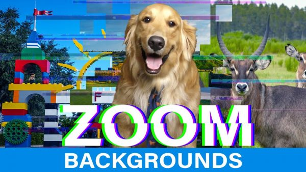 dog in front of LEGOLAND FL background with Zoom Background text overlay
