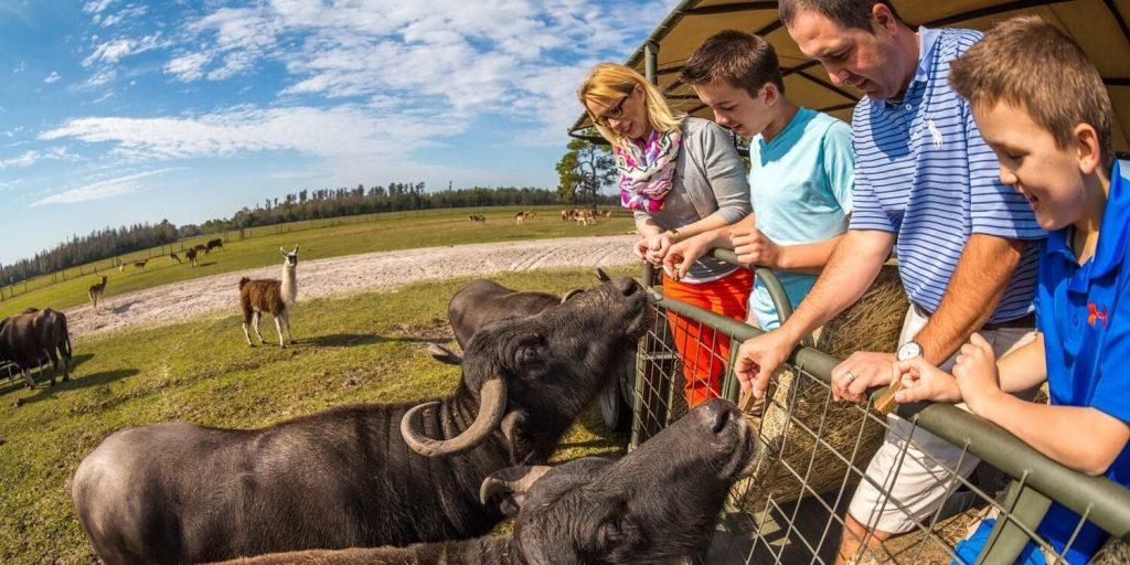 About Safari Wilderness