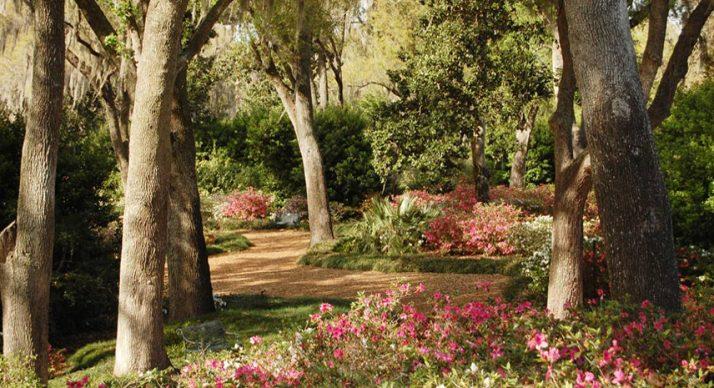 Peak Bloom at Bok Tower Gardens