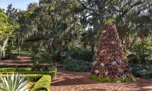 Bromeliad Christmas tree with oak tree in background at Bok Tower Gardens in Lake Wales, FL