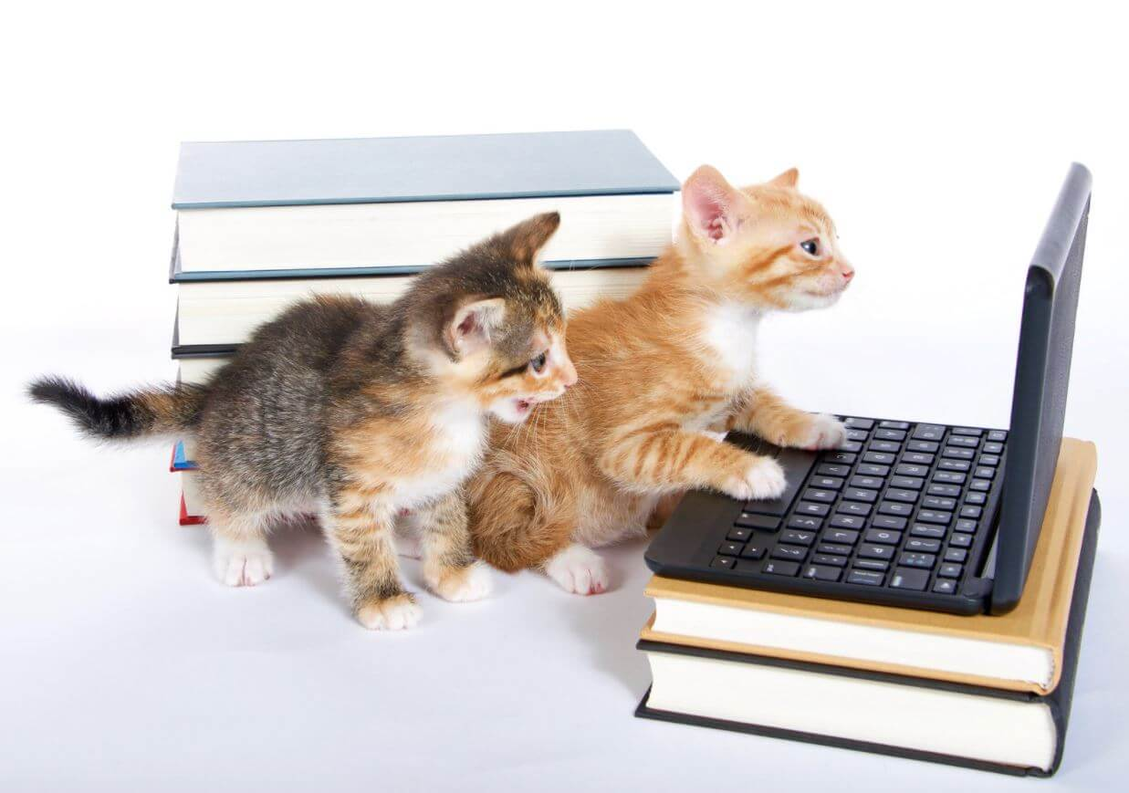 2 kittens with books and a laptop, SPCA Kitten Cuddle and Adoption Event