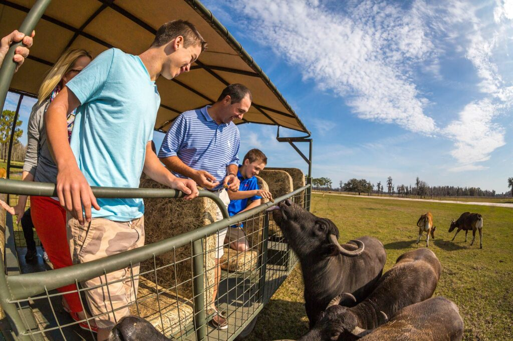 family feeding water buffalo while aboard a safari vehicle at Safari Wilderness Ranch in Lakeland, FL